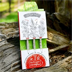 Набор цветных растущих карандашей. Чайный набор - фото 16888