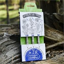 Набор цветных растущих карандашей. Итальянские травы - фото 16894